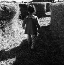 In the kiddie hay maze