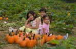 Pumpkin Patch Portraits- 2018-10-07T08:54:57 - 012