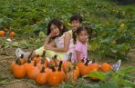 Pumpkin Patch Portraits- 2018-10-07T08:54:57 - 012
