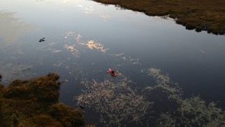 West Shirley Bog 03