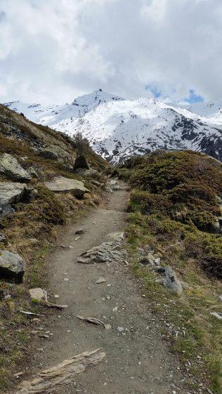 The Marmot Trail