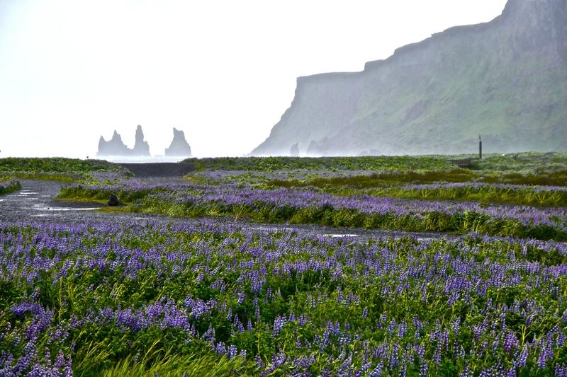 vik-south-coast-iceland