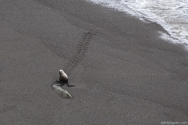 Argentina Patagonia Coast