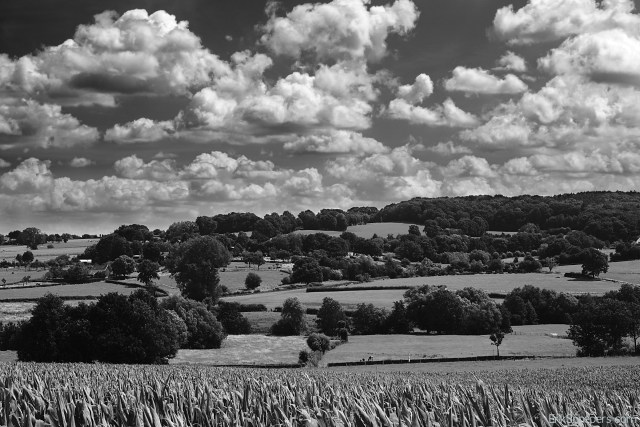 Summer Landscapes Limburg Epen