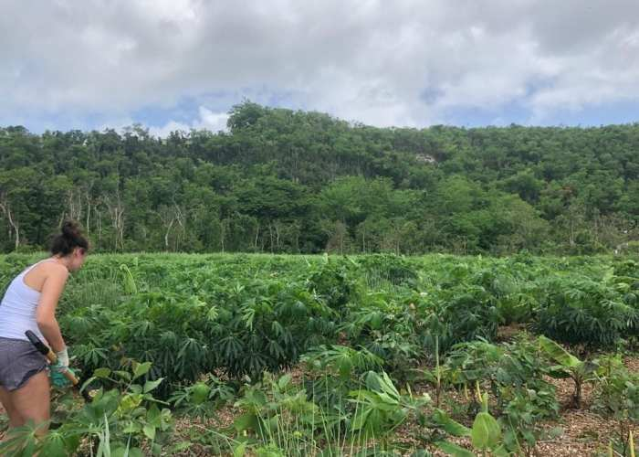 Kia volunteered all over Puerto Rico through an agricultural collective that provides farming for communities in need - especially after Hurricane Maria.