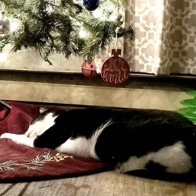 Both of out boys love sleeping under the tree whenhellip