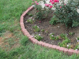Rose Garden before leveling