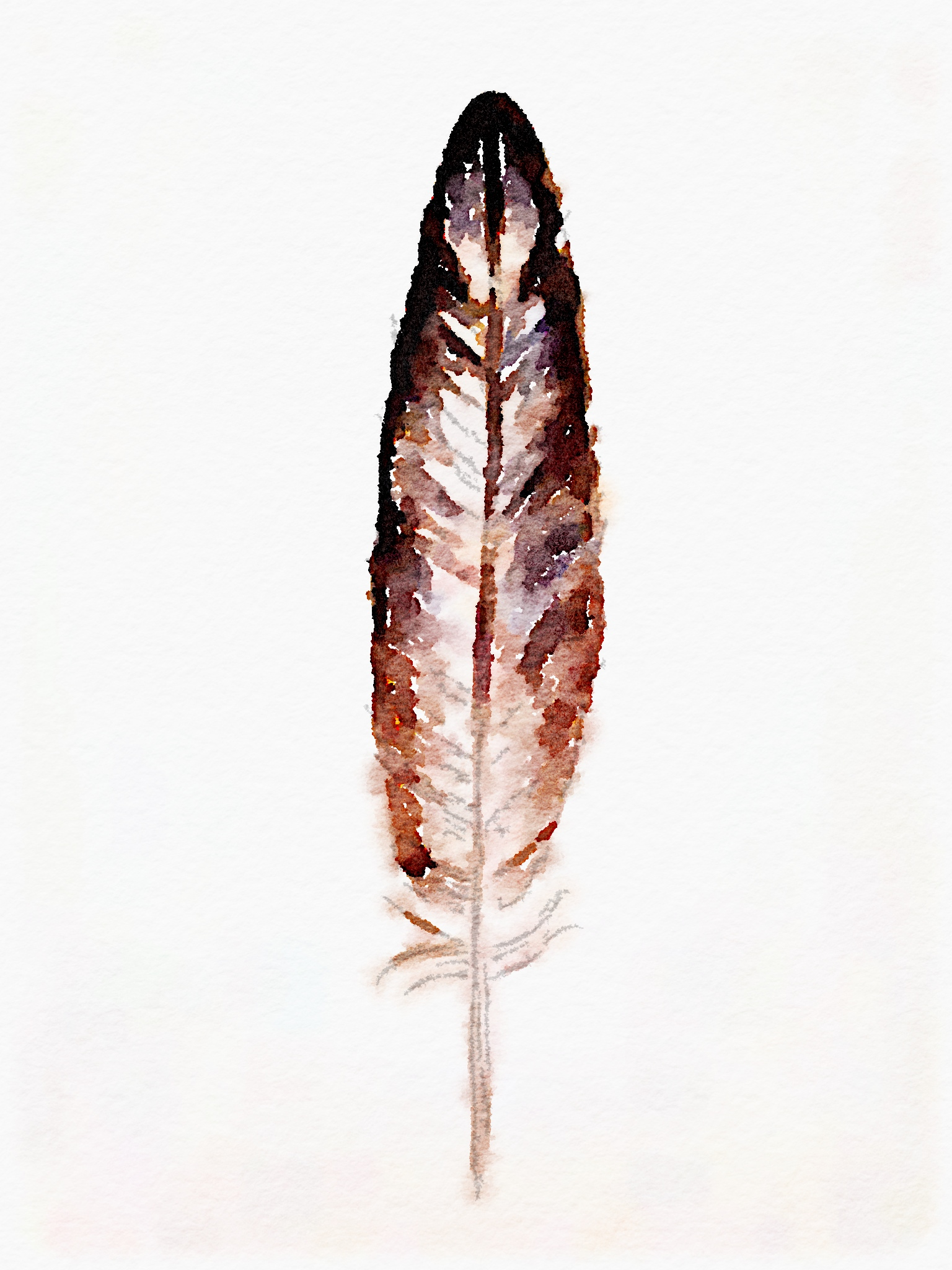 Watercolor Feather Free Printable Art