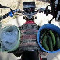 zeytinleri azar azar motorla toplayıp köye getirdim