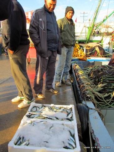 büyük tekneler balıoğı kasayla sattığından bir kaç kişi ortak alabilirsiniz