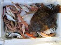 bazan satamayacağınız kadar az balık tutarsınız