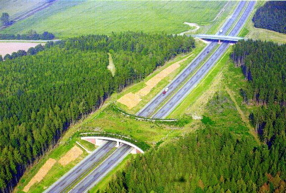 yeşil köprü