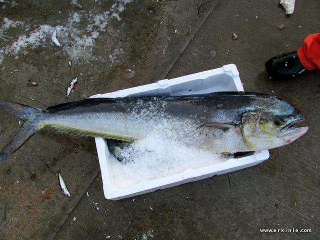 ava giden avlanır mı