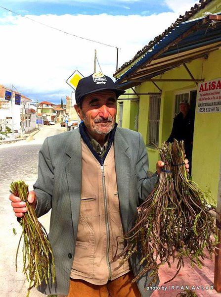Asparagus tilkimen kedirgen