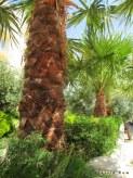 budadığım palmiyeler