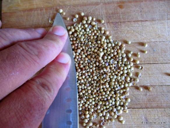 Kişniş tohumları çıtlatılıyor bir bıçak yardımıyla