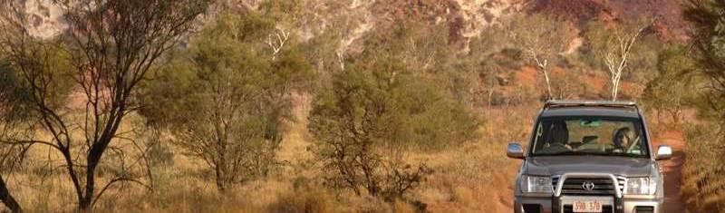 Desert Oaks