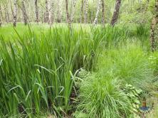Gräser am Wanderweg der Alsterquelle