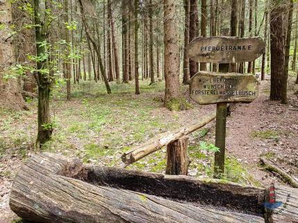 Wanderweg Mönkloh Waldlehrpfad Hasselbusch Pferdetränke