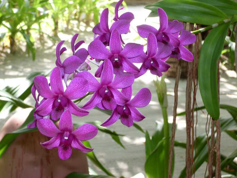 Orchideenparadies Malediven