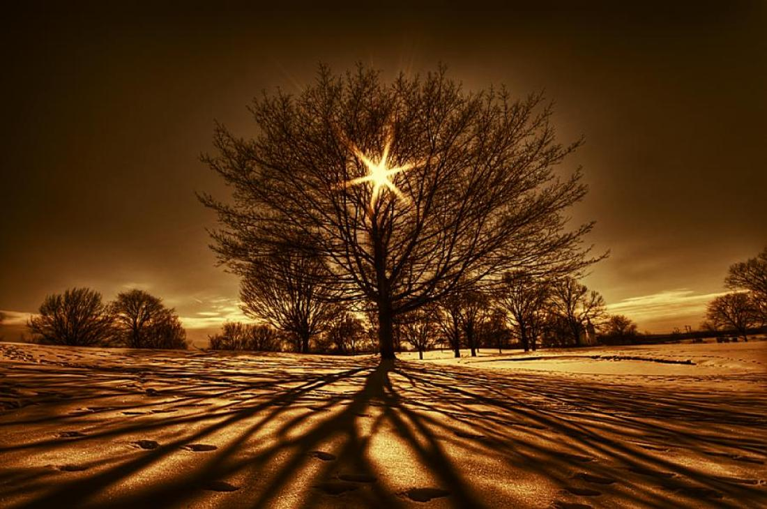 tree-of-light