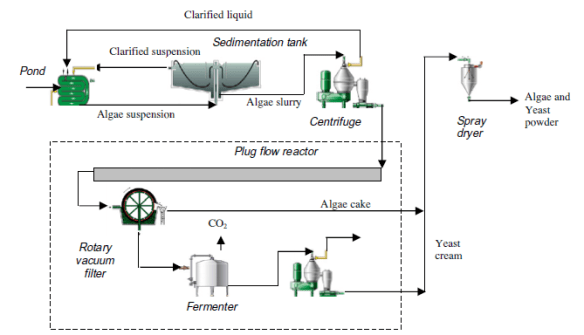 Large scale algae production process showing proposed additional steps (within the dotted box). For more information click on the image.