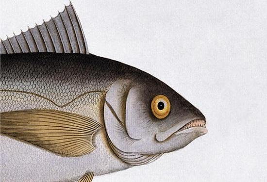 i pesci non chiudono gli occhi di erri de luca