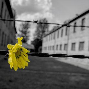 Una speranza ostinata: la vita dopo la morte