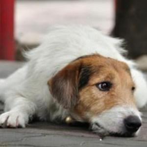 L'iniziativa di San Francisco: nei negozi di animali saranno venduti solo cani e gatti abbandonati