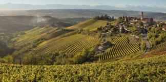 vigne rizzi barbaresco