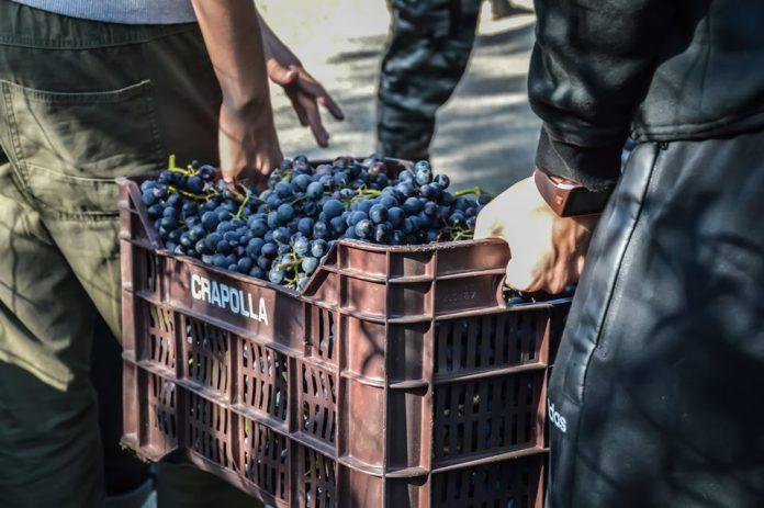 cassa uva di sabato