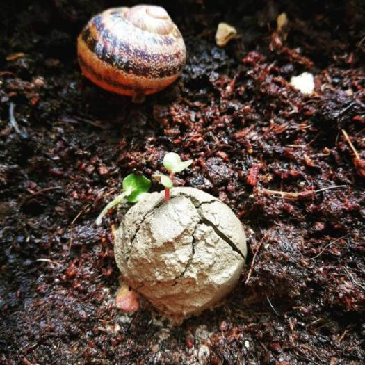 seedball - seedbomb - istruzioni palle di semi - R nel bosco