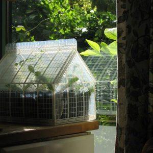 mini greenhouse - mini serre - talee, piante e semine indoor - R nel bosco (5)