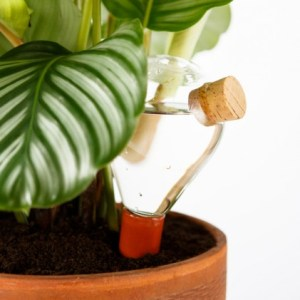 sistema per irrigare le piante - indoor e outdoor - R nel bosco