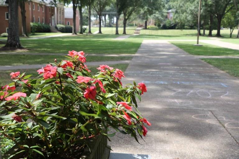 Flowers&Sidewalk