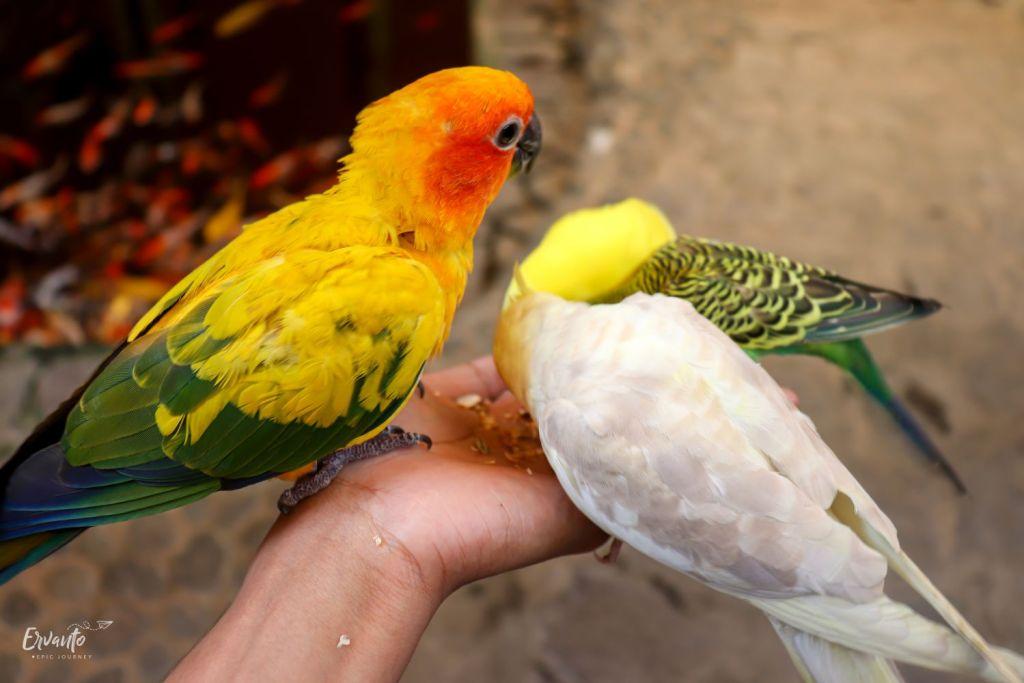 Memberi Makan Burung di Bird House Paradise