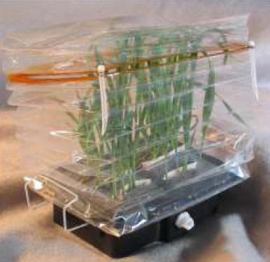 ESA Greenhouse