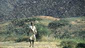 Desert_locust_outbreak_small.jpg