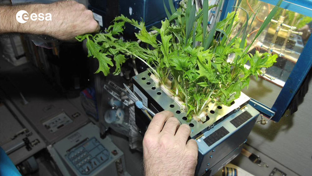 Plants  Research  Human Spaceflight  Our Activities  ESA