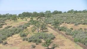 california19