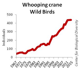 A Wild Success: A Systematic Review of Bird Recovery Under