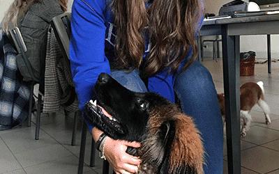 Morbecque : à La Motte-au-Bois, en classe avec les futures auxiliaires vétérinaires et leurs chiens