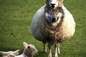 Cansei dos pastores da prosperidade! Estou de saco cheio!