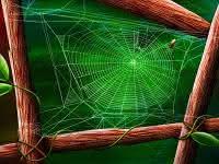ilustrações, mensagens, reflexões, teia de aranha de deus