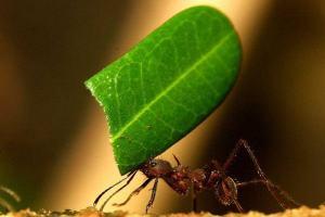 Ilustrações cristãs: Uma professora chamada formiga
