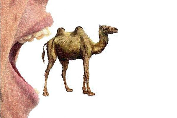O que significa coar um mosquito e engolir um camelo?