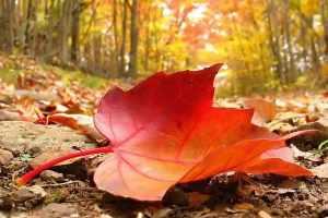 Na Bíblia está escrito que não cai uma folha sem a permissão de Deus?