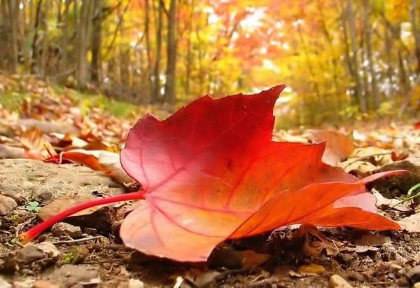 Não cai uma folha sem a permissão de Deus
