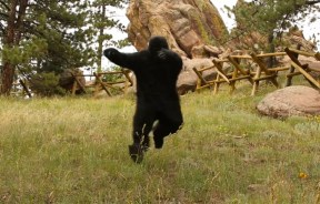 El Gorila se ha vuelto loco – Access Fund