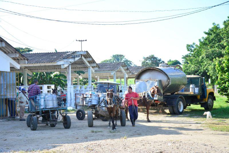 acopio de leche en sancti spiritus (1)